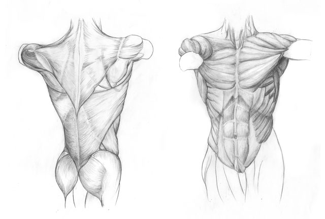Anatomische Studien – Alessandro Holler