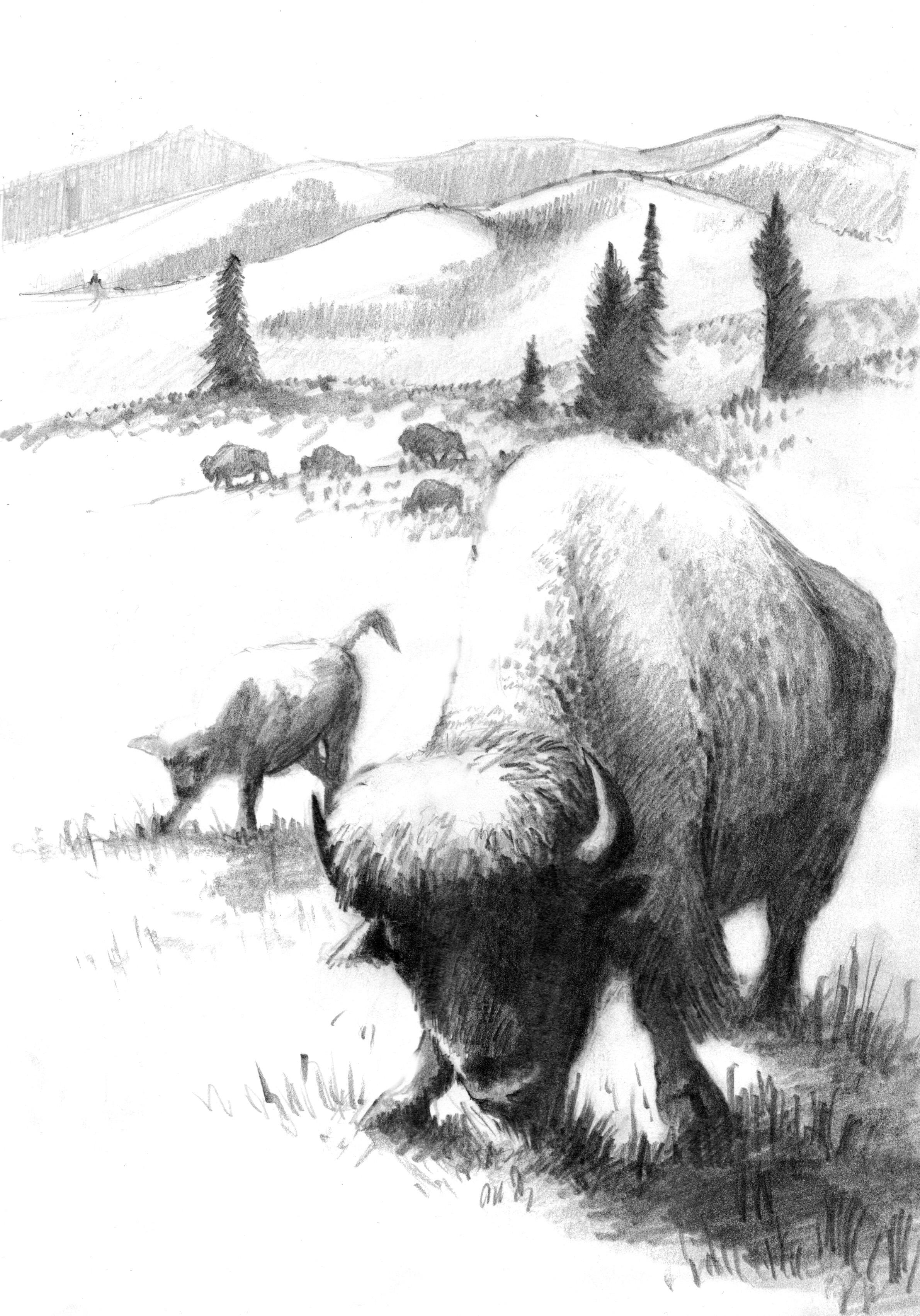 white bison art